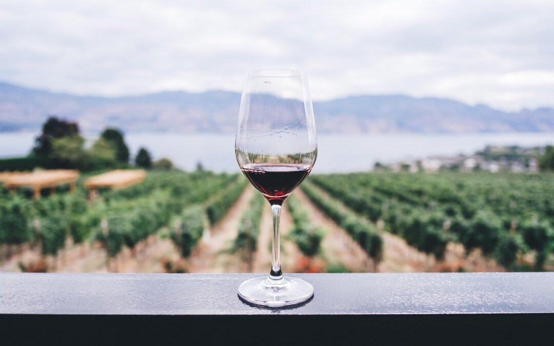 Team Building: Cata de vinos